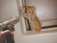 Cat_being_gun_down