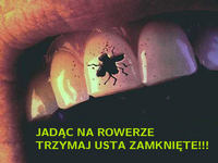 Dent2